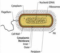 Електрически микроби